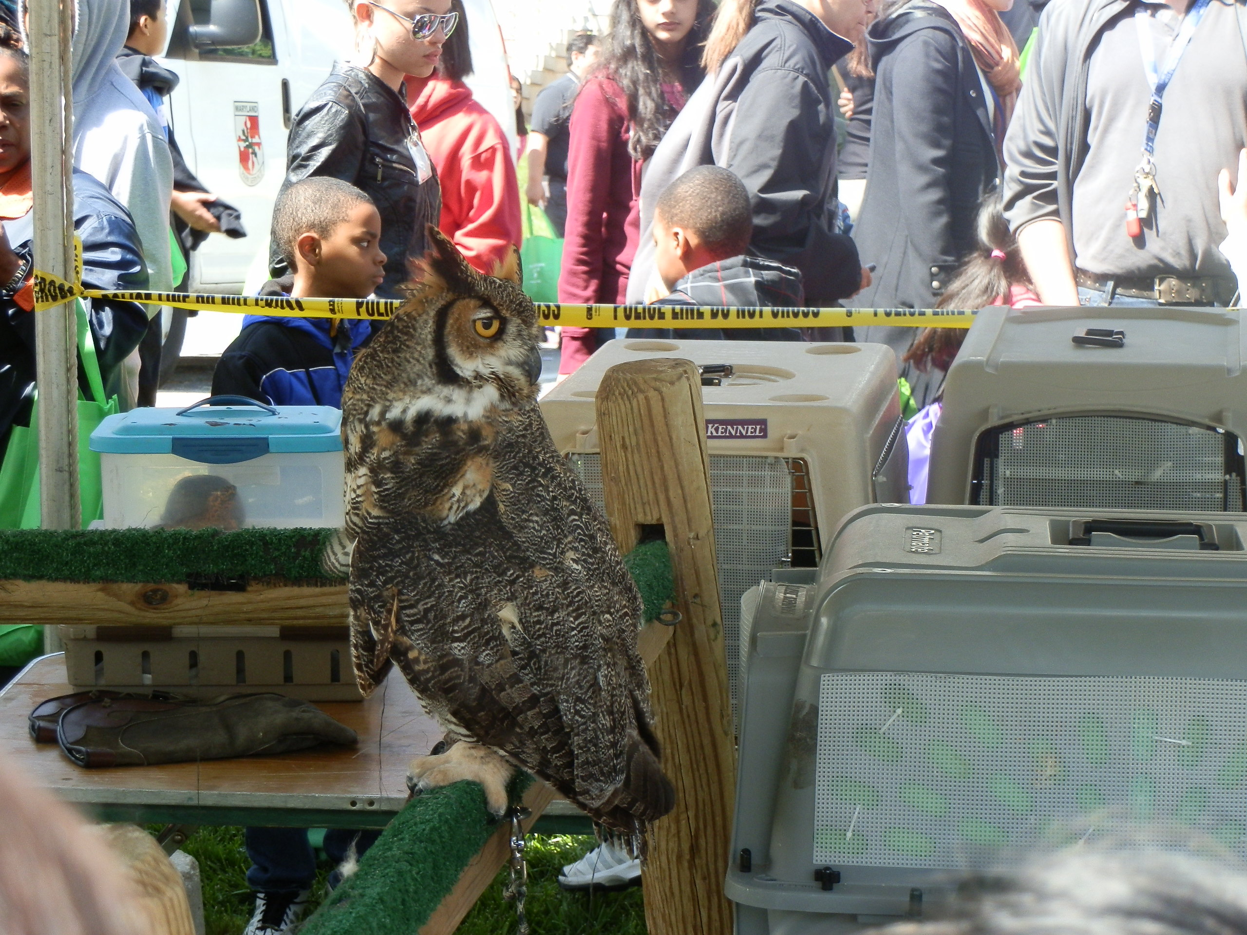 Owl at Earth Day